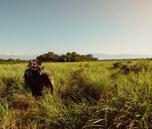 elephant back ride